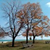 More Autumn in Chicago