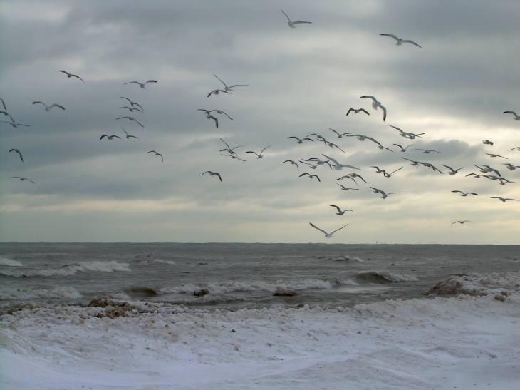 Birds Having a Blast at Chicago Lakefront